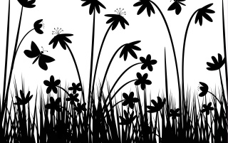 Greyscale flowers wallpapers and stock photos