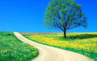 Spring road wallpapers and stock photos