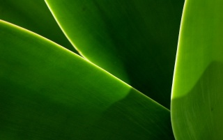 Leaf curves wallpapers and stock photos