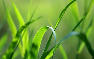 Green grass straws wallpapers and stock photos