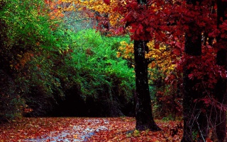 Autumn forest wallpapers and stock photos