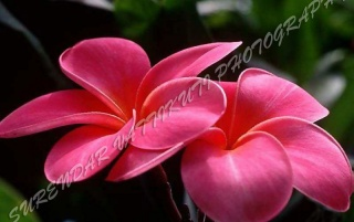 PINK FLOWER ZOOM wallpapers and stock photos