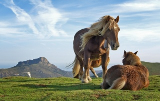 Two horses wallpapers and stock photos
