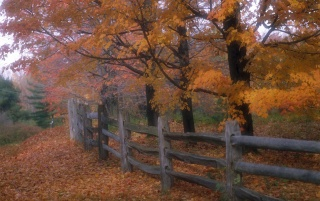 Country fence wallpapers and stock photos
