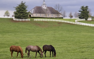 Horse farm wallpapers and stock photos