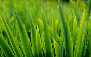 Random: Grass close up