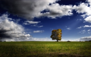 Lonely tree wallpapers and stock photos