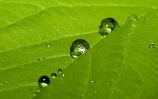 Water drops on leaf wallpapers and stock photos