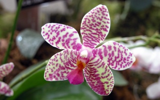 Lonely orchid wallpapers and stock photos