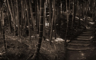 Previous: Bamboo forest