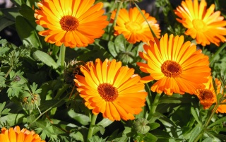 Orange flowers wallpapers and stock photos
