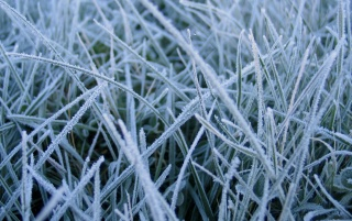 Frosted grass wallpapers and stock photos
