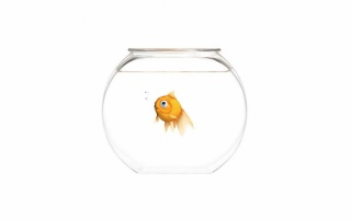 Random: Small orange fish