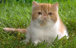 Butterscotch the cat wallpapers and stock photos