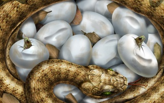 Hatching snakes wallpapers and stock photos