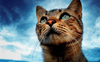Portrait of a cat wallpapers and stock photos
