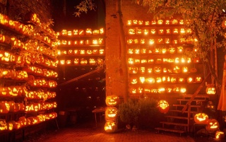 Random: A lot of pumpkins