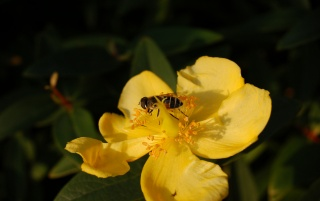 Bee on a flower wallpapers and stock photos
