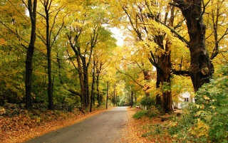 Yellow Autumn wallpapers and stock photos