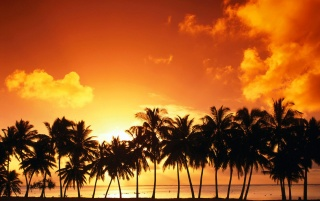 Line of palm trees wallpapers and stock photos