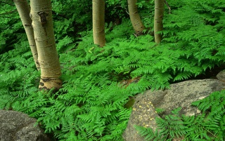 Green contrast forest wallpapers and stock photos
