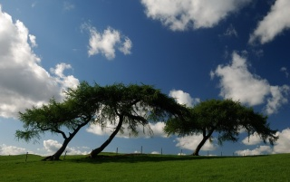 Flat trees wallpapers and stock photos