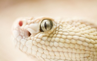 snake wallpapers and stock photos