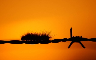 Caterpillar on fence wallpapers and stock photos
