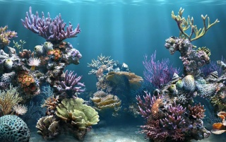 Fish tank water wallpapers and stock photos