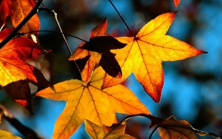 Autumn leaves light wallpapers and stock photos