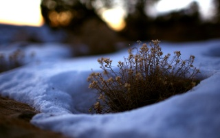 Surrounding snow wallpapers and stock photos