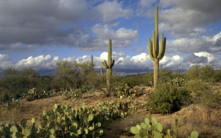 Saguaro Park wallpapers and stock photos