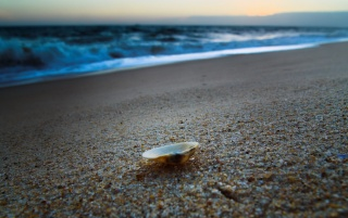 Shell on the sand wallpapers and stock photos