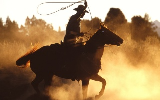 Cowboy with lasso wallpapers and stock photos