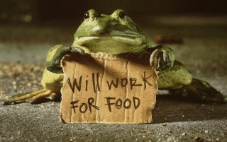Frog with sign wallpapers and stock photos