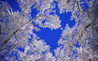 Frosted trees wallpapers and stock photos