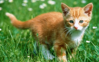 Previous: Kitten in the grass