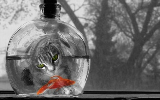 Cat watching fish wallpapers and stock photos