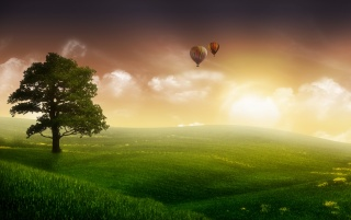Balloons and a tree wallpapers and stock photos