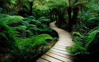 Lush vegetation path wallpapers and stock photos