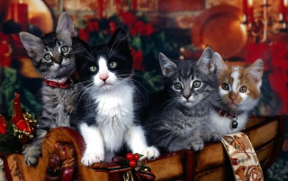 Xmas kittens wallpapers and stock photos