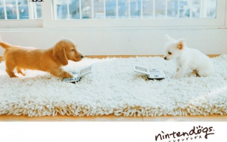 Two nintendo dogs wallpapers and stock photos