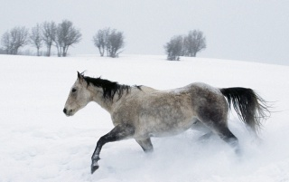 Next: Horse in the snow