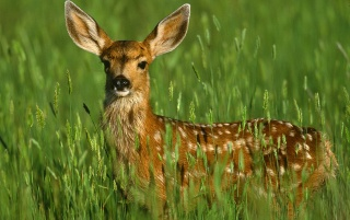 Random: Deer in the grass