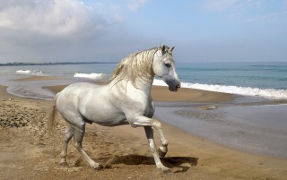 Horse on sand wallpapers and stock photos