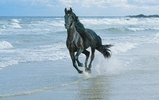 Black horse and sea wallpapers and stock photos