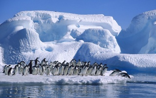 Pinguins waiting wallpapers and stock photos