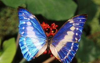 Blue butterfly wallpapers and stock photos