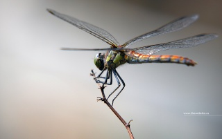 Random: Macro on a dragon fly