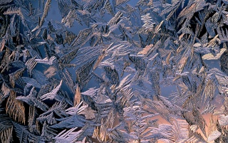 Morning frost wallpapers and stock photos